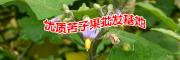 广南县坝美那力苦子果种植基地