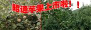 云南昭通苹果种植中心