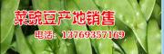 茄子/青菜本地洋芋/小瓜/本地茄子多少钱%产地青菜/洋芋销售
