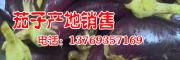 云南茄子网_云南三农网