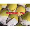 今日芒果(水果)价格@芒果多少钱一斤 今年芒果价格