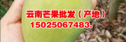 贵州芒果产地