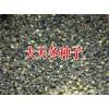 云南大天冬种子价格/丽江市天冬种子/贵州大天冬种子多少钱