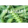 长寿仁豌豆种子价格保山豌豆种子