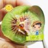 红心猕猴桃   猕猴桃  猕猴桃 已上市 支持一件代发