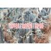 今年苹果苗市场价格@龙威苹果苗新品种|云南苹果苗销售15924856532