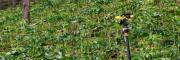 重楼种苗销售或回收公司#