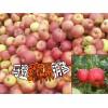 云南苹果#云南野苹果怎么样?大理野苹果图片