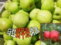 野苹果基地◆云南野苹果批发 (12)