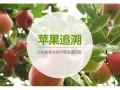 野苹果什么味道?(附图) (8)