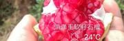贵州毕节哪里软籽石榴小苗?