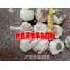 弥渡大蒜◆曲靖市越州大蒜种