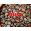云南板栗(也叫栗子)网◆早熟蒜◆#早熟大蒜栽培技术
