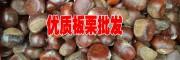 云南栗子多少一斤◆云南板栗(也叫栗子)网
