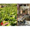 """南涧银溪生态绿茶制品厂,""""银溪生态绿茶基地图片"""
