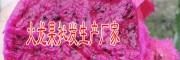 中国火龙果产地(附图)