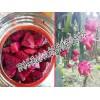 红龙果、龙珠果也叫火龙果哪里的好_火龙果批发价格最低是多少