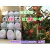 红富士苹果特点和价格:色泽鲜艳/肉质细脆+昭通昭阳苹果