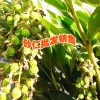 楚雄腾烊中草药种植公司产品信息(13577804428)
