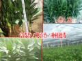 富贵竹是什么?什么是观音竹/何花竹?
