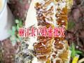 云南蜂蜜网#蜂蜜养殖网%