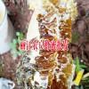 昆明土蜂蜜多少钱#云南丽江鲁甸乡的土蜂蜜批发