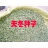 天冬种子多少钱?云南天冬种子市场报价在多少?