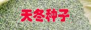 天冬种子发芽技术#丽江天冬基地销售