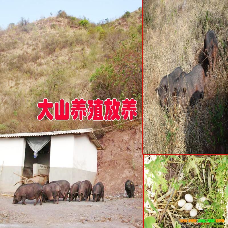 夕阳彝族乡位于晋宁县西南面,是昆明市四个少数民族乡之一,距县城昆阳