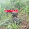 晋宁夕阳大山养殖基地产品信息#生态土鸡