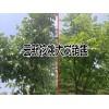 出售云新核桃大树一批(规格直径8-15公分
