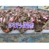 四川哪里有白芍种苗销售#四川巴中市白芍多少钱一斤