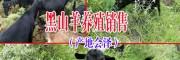 会泽火红黑山羊特点(附图)