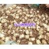 大理种植基地(食用百合)#云南宣威市百合种植专业合作社