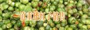 普洱景东哪里有重楼销售#镇沅七叶一枝花种子价格