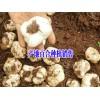 云南百合批发厂家#云南百合种植销售供应商