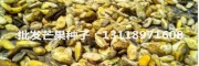 芒果种子多少钱一斤