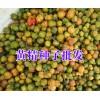 云南黄精种植价格(13987235380)|黄精种苗报价商家