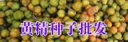 滇黄精市场价值是多少?