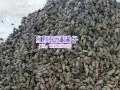 野蚕豆根种子图片