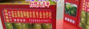大青枣包装图片#云南大青枣供应商(种植户)