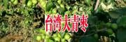 大青枣基地快递信息(低价)