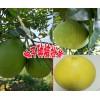 |云南红肉柚子产区|柚子是什么季节的水果|屏边柚子价格