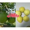 柚子今日均价+产区云南柚子哪里最多