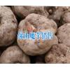 保山魔芋哪里能买到+保山魔芋供应商家15287555151