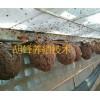 广西胡蜂养殖大王#人工养殖胡蜂图片