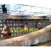 云南胡蜂养殖教程·云南马蜂养殖户#胡蜂养殖专业户15288058995