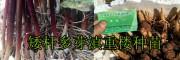 云南高杆滇重楼种子种植销售,大理振轩生物科技