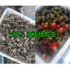 2017年优质滇重楼种子出售,品种纯发芽率高