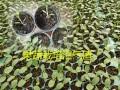 种蔬菜水果用什么肥料?沼气渣对蔬菜生长有什么作用?